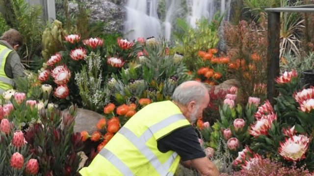 Dynamic play their part for SANBI to win Gold at the 2016 Chelsea Flower Show